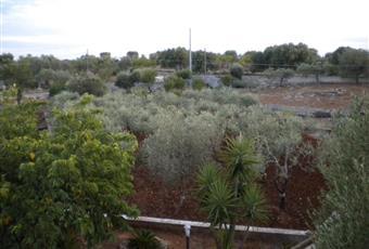 Foto GIARDINO 5 Puglia BR Ostuni