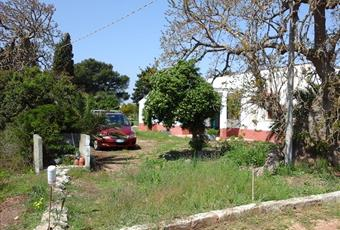 Foto GIARDINO 13 Puglia BR Ostuni
