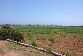 Il giardino è con erba Puglia BR Ostuni