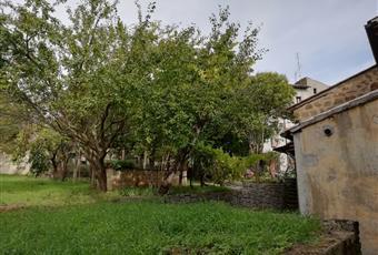 Il giardino è con erba Lazio VT Civitella D'agliano