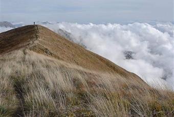 Foto ALTRO 6 Piemonte AL Albera ligure