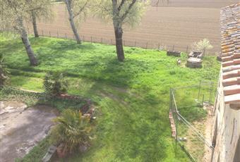 Il giardino è con erba Toscana PI Montopoli in Val D'arno