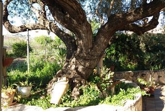 Il giardino è con erba Sicilia AG Porto Empedocle