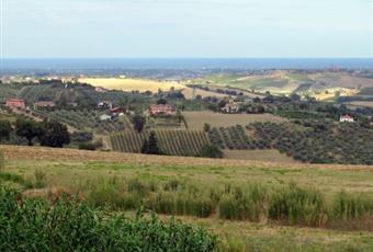Con ulivi e piccola vigna Emilia-Romagna RN Montescudo