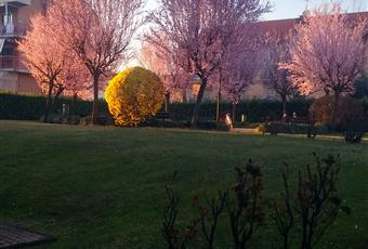 Foto GIARDINO 19 Piemonte TO Volpiano