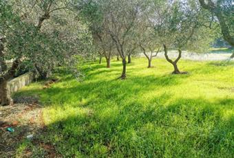 Il giardino è con erba Puglia BR Carovigno