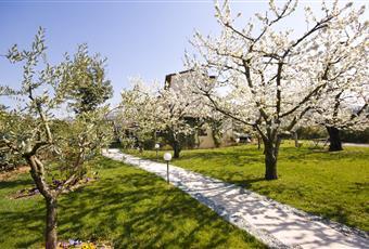 Il giardino è con erba, il pavimento è piastrellato Veneto VR Negrar
