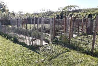 Il giardino è con erba Piemonte AL Isola Sant'Antonio