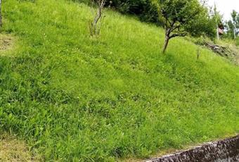 Il giardino è con erba Veneto BL Gosaldo