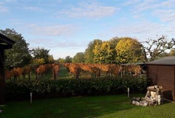 Il giardino è con erba Friuli-Venezia Giulia GO Capriva del Friuli