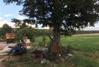 Foto GIARDINO 2 Emilia-Romagna FE Argenta