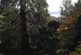 Giardino di pertinenza di 300mq circa, ma la casa si colloca all'interno di un parco di 3 ettari condiviso. Vista totale del lago Maggiore e del monte Rosa, sequoie ed altre essenze arboree secolari. Laghetto con fiori di loto, antica ghiacciaia in pietra anticamente usata per derrate alimentari. Ampio parcheggio con cancello elettrico. La casa è anche munita di un ingresso separato. Piemonte VB Premeno