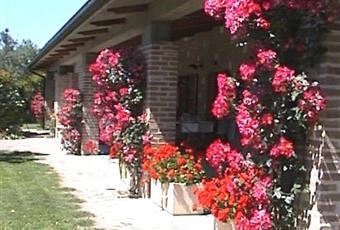 Foto degli esterni, il giardino è con erba Marche PU Pesaro