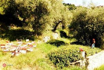 Il giardino è con erba Liguria IM Imperia