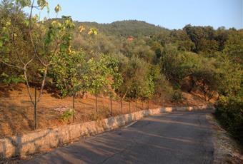 Foto ALTRO 8 Campania AV Calabritto
