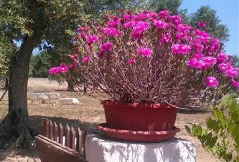 Foto SALONE 2 Puglia BR Carovigno
