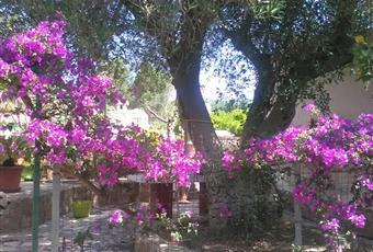 Foto GIARDINO 14 Puglia BR Carovigno