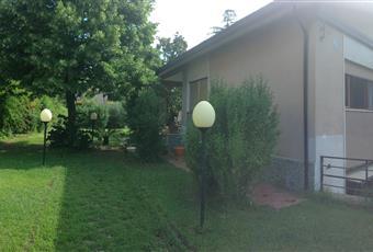 Il giardino è con erba, alberi e piante di circa 50 anni Calabria CS Castrolibero