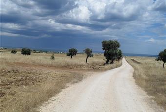 Foto ALTRO 4 Puglia BR Ostuni