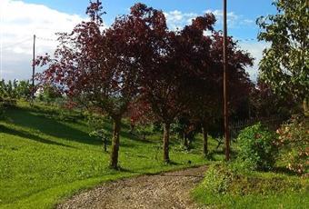 Foto ALTRO 6 Piemonte AT Cantarana
