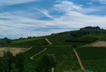 Foto ALTRO 19 Piemonte CN Mango