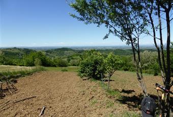 Foto ALTRO 16 Piemonte AL Sant'Agata Fossili
