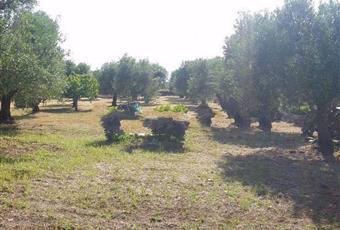 Foto ALTRO 14 Puglia BR Ostuni