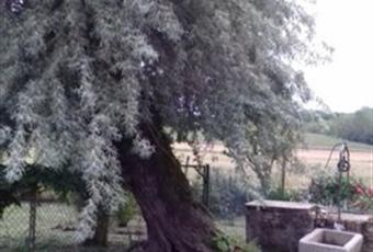 Foto GIARDINO 4 Piemonte AL Cassine