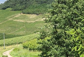 Il giardino è con erba Piemonte AT Canelli