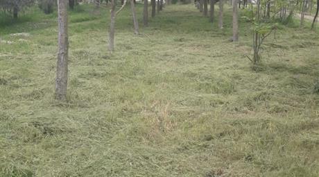 Vendo 2 terreni di 100x11,15 metri circa (a 10.000 euro ognuno)
