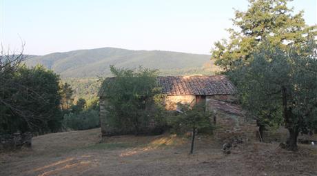 Complesso immobiliare di 3 unità vicino Gargonza