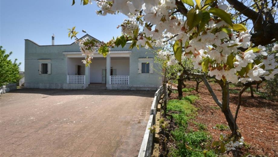 Villa singola con frutteto